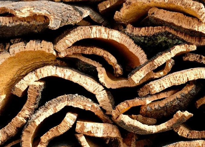 Harvested cork bark